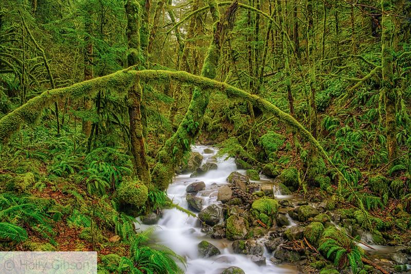 Ruckel Creek - Columbia River Gorge