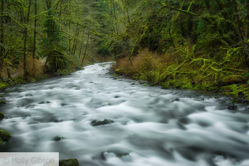 Stream near Wahclella Falls - 155