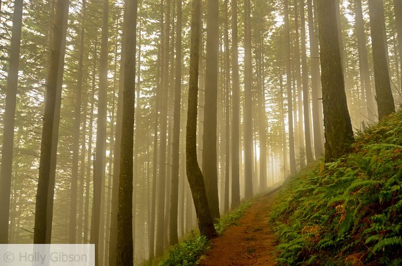 Foggy trail - Columbia River Gorge, Trail 420