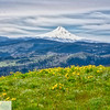 Mt. Hood - Columbia River Gorge