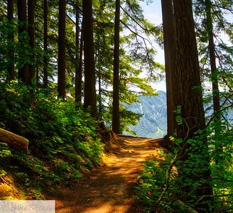 Hardy Ridge/Hamilton Mountain Hike