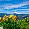Mt. Hood and wildflowers