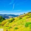 Mt. Hood - Washington
