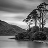 Lakeside Trees