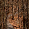 Conservation Interpretive Center, Cape Girardeau, MO:  Hiking Trail. Pentax K-7, Pentax 50-135mm f/2.8 lens, Shot at AP-f/16, SS-1/25, and ISO-100.