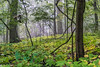 Featured:  Forest, fog, four-footed fauna