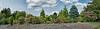 Evergreens and hydrangeas in a harmonious landscape