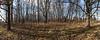 Woods with deer