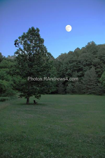 Corbett's Glen meadow (alluvial plain)