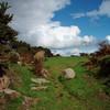 Path across the moors