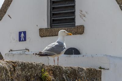 Gull-Guard