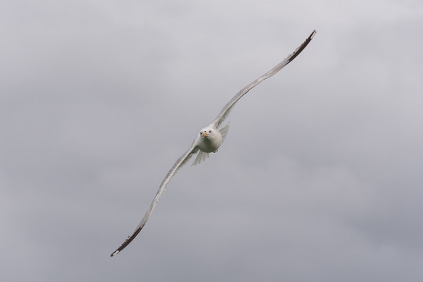 Take flight!