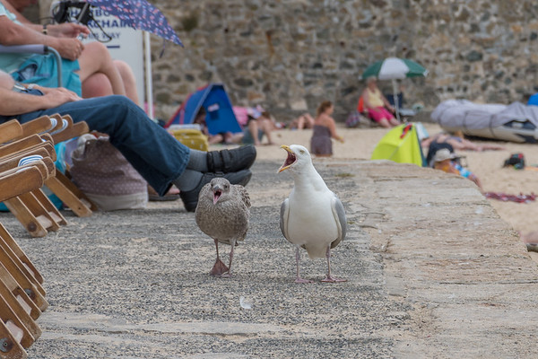 The Seagull Police