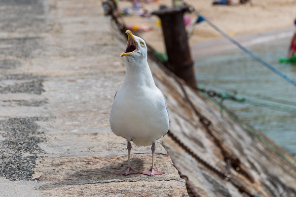 Gull life