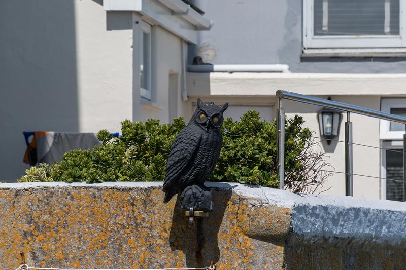 A Hoot at St Ives