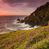Wild bluebell flowers glowing in the setting sun after a spring shower at the old Crown engine houses of Botallack Mine.
