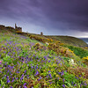 Wild bluebell flowers at the old Crown engine houses of Botallack Mine. A storm is approaching at the distance.