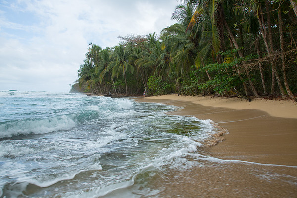 Beach and Surrounding Forest