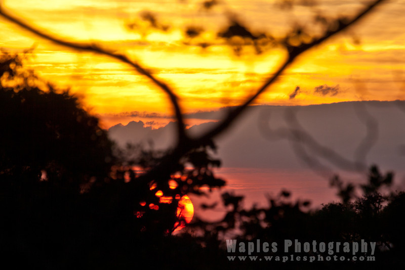 Sunset, Monteverde Lodge
