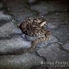 Fer-de-lance pit viper