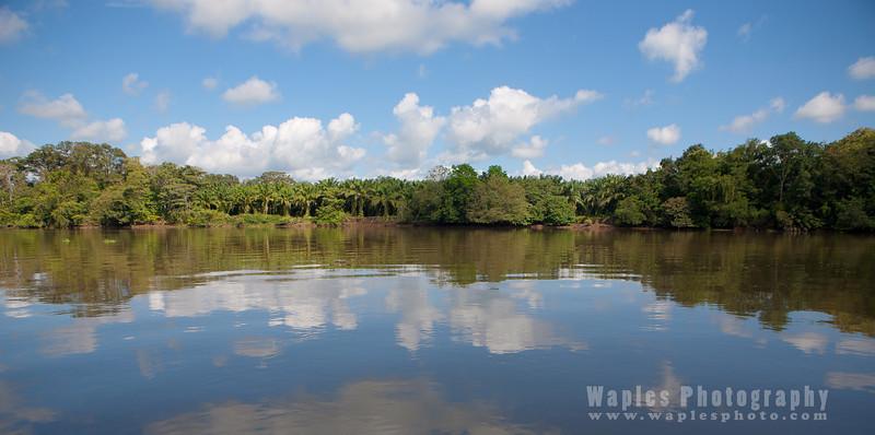 Mangroves and Sky Along Rio Sierpe