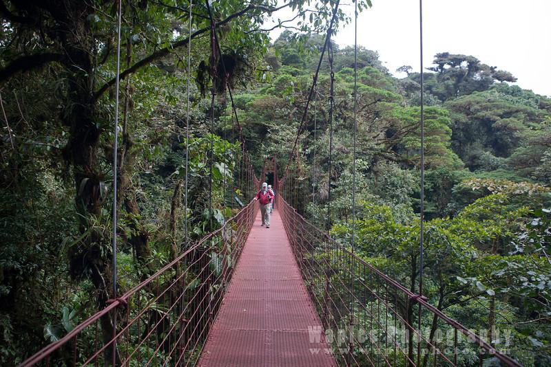 On Suspension Bridges In the Rainforest