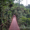 On Suspension Bridges In the Rainforest