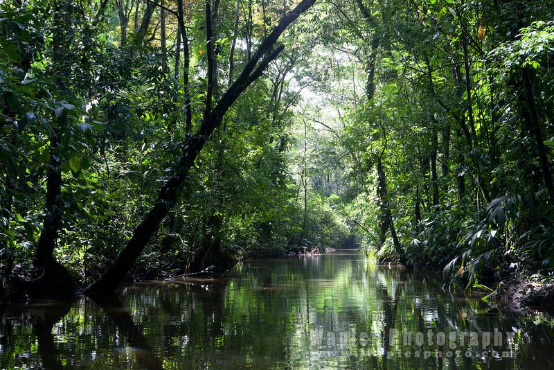 Tropical Lowland Forest, Parque Nacional Tortuguero