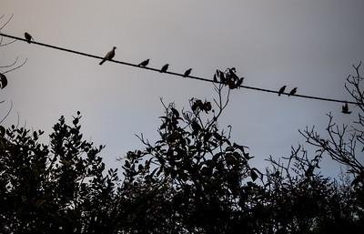 Côte d'Azur oiseaux sur un fil