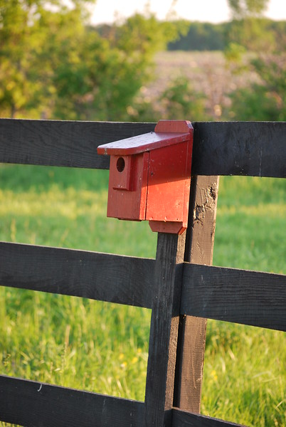 Red Bluebird House out in the country near Spencerville, Ohio