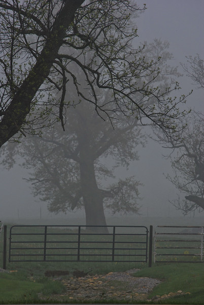 Foggy Morning on the Farm