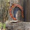 Old Rusty Horseshoe