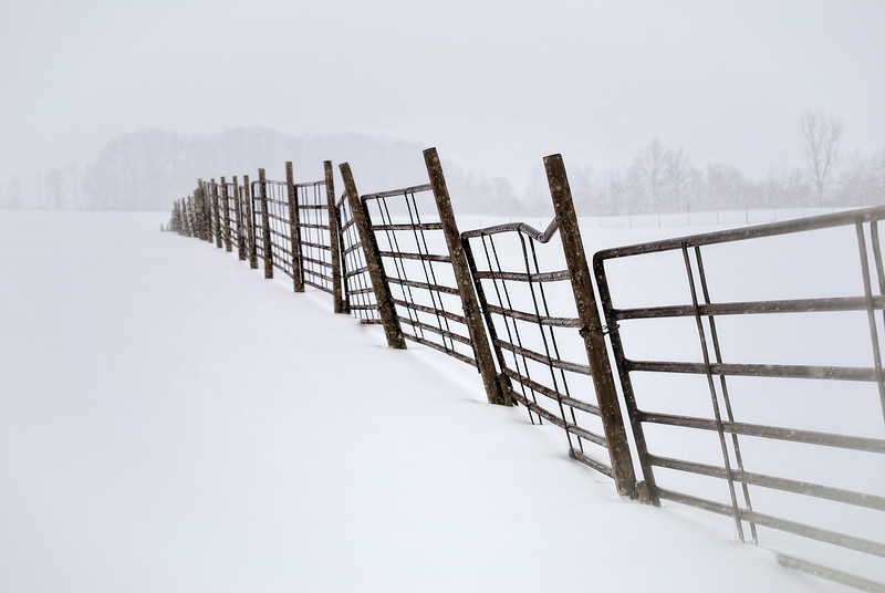 Old fence weathering the winter snow wondering if this winter will ever end. <br /> Photo taken near Spencerville, Ohio.
