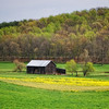 Barn in the Hollar . Located in the New River Gorge area of West Virginia.