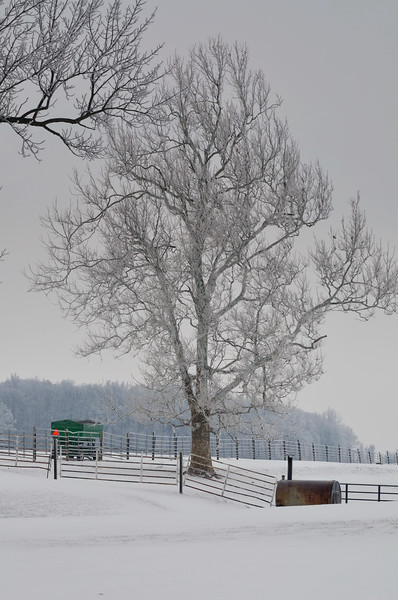 Ohio Winter 2010
