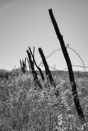 Country Scene - Barb Wire Fence - Photo Taken: June 6, 2008