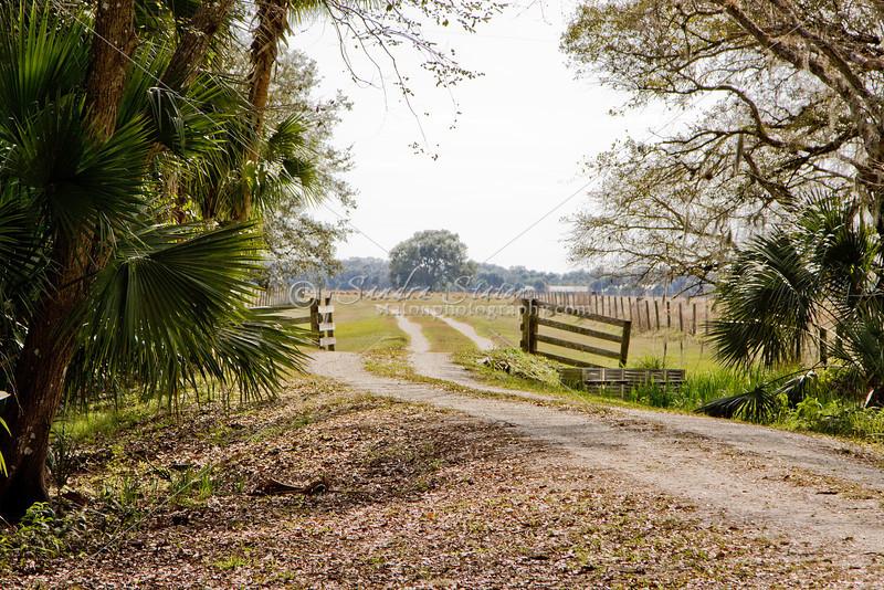 Cattle gap gate_SS8330