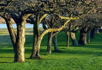 Tree Row (39656951)