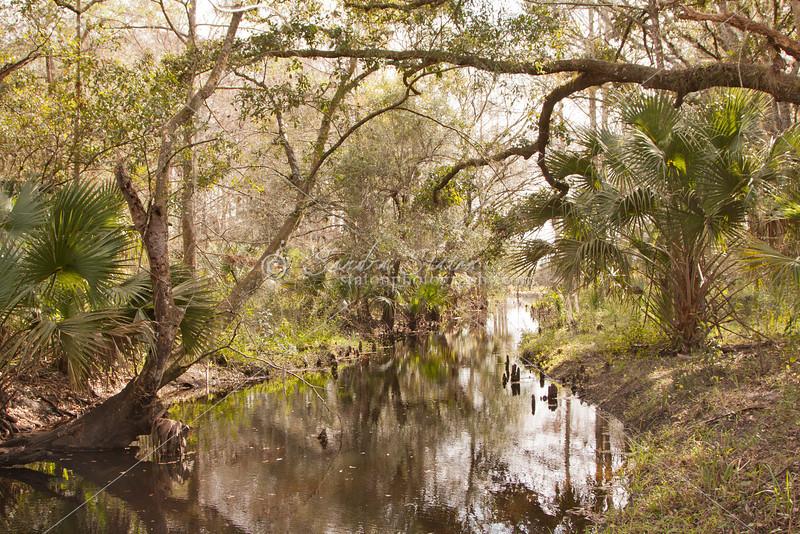 Taylor creek_SS8334