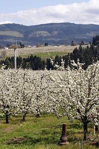 Orchard   | Sigma 18-50mm f/2.8 EX DC