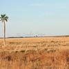 Lone palm tree_SS8060