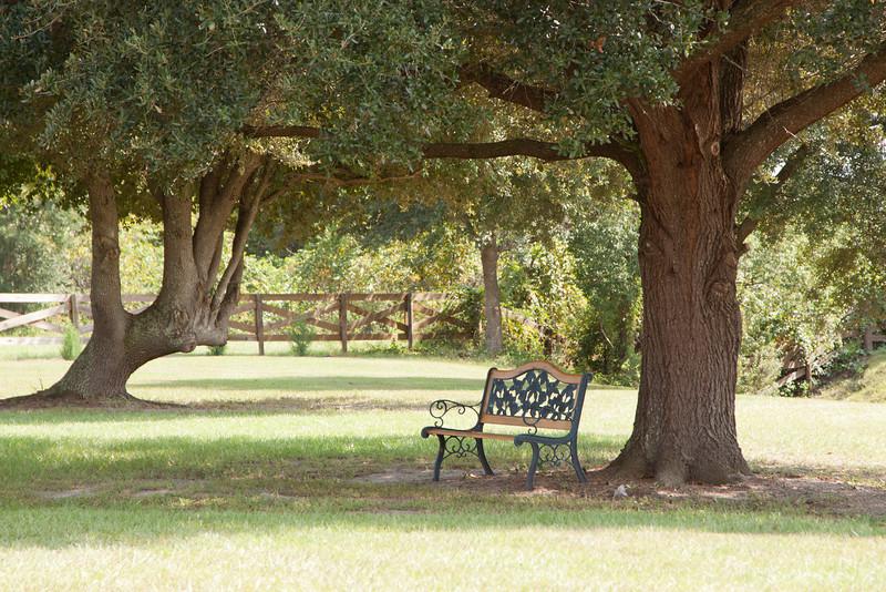 Bench under oak_SS5158
