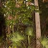 Florida woods_SS8203