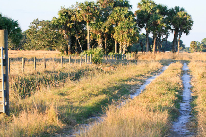 Ranch road_SS5849
