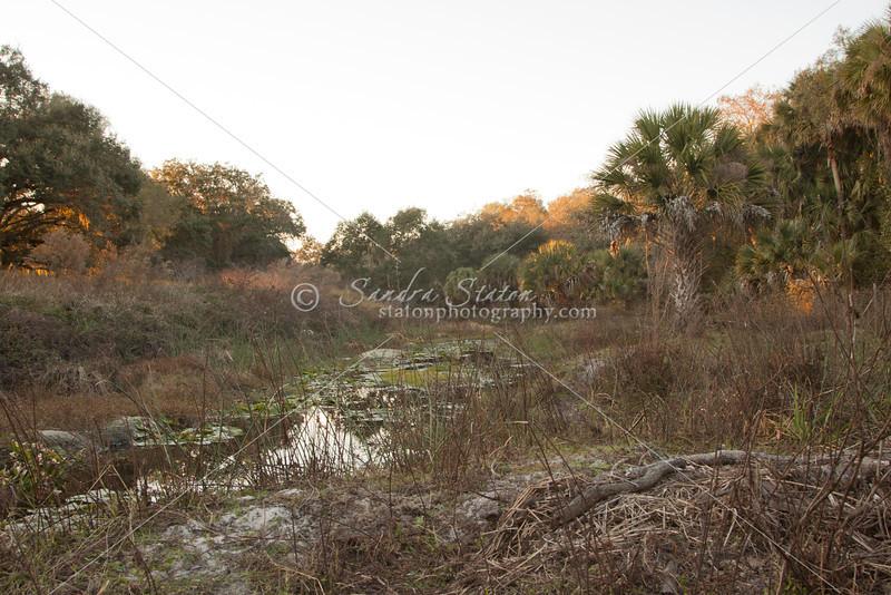 Ranch livestock pond_SS8177