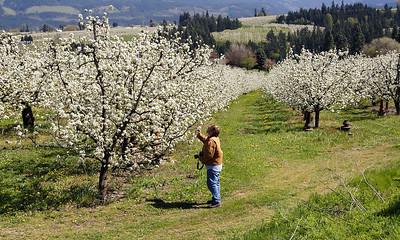 Bob in the Orchard   | Sigma 18-50mm f/2.8 EX DC
