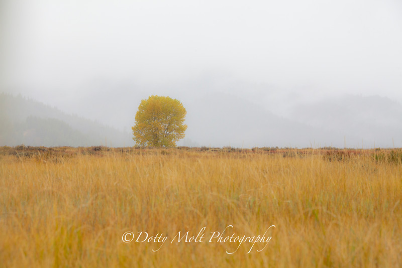 Lonely Yellow Tree in the fog