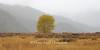 Lonely Yellow Tree