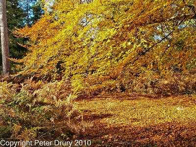 Creech Wood - Forest Views