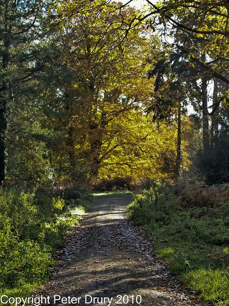 30 Oct 2007 - Woodland walks. Copyright Peter Drury 2007